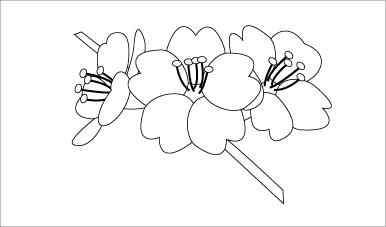 木彫図案集|桜-01|サンプル